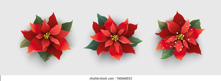 Red Christmas poinsettia flower isolated on white background. Vector Illustration.