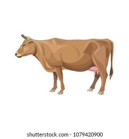Red cow standing. Side view. Vector illustration isolated on white background