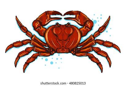 red crab vector illustration