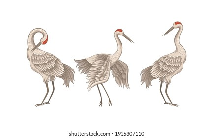 Red Crowned Crane Standing Spreading Wings and Tilted Head Down Vector Set