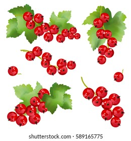 Red currant berries. Set of hand drawn vector illustrations of sprigs of redcurrant with bunch of berries and green leaves on white background.
