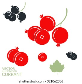 Red currant. Black currant. Redcurrant.  Vector illustration