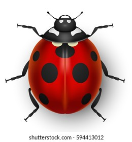 Red cute ladybug isolated on white background. Top view of ladybird bug. Vector illustration.