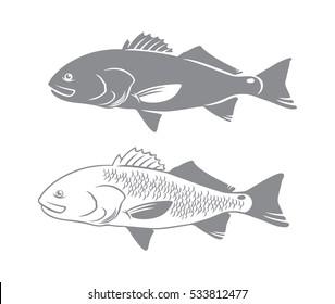 red drum fish