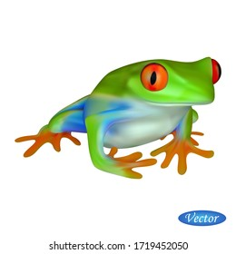 Red eyed tree frog isolated on white background. Realistic tree frog. Vector illustration amphibian 3D. Beautiful natural animal. Macro icon colorful toad. Design for paper, banner, t-shirt, logo.