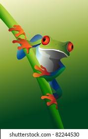 Red Eyed Tree Frog on vine