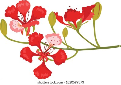 red flamboyant in tropical place