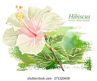 Red Flower Hibiscus on green background - vector illustration / Eps10