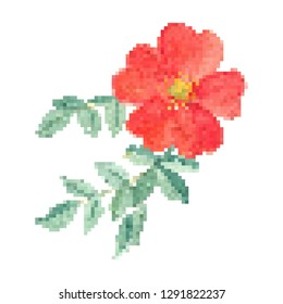 red flower pixel art vector, isolated natural floral on white background