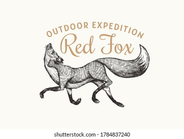 Red fox badge. Forest ginger wild animal label or logo. Vector Engraved hand drawn Vintage old sketch for stamp, t-shirt or typography.