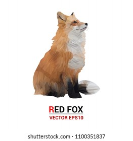 Red fox  illustration.  triangle low polygon style on  white color background