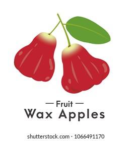The red fruit Water rose apple, wax apple, wax jambu, bell-fruit, Java apple, jambu, Jambu Air, Syzygium samarangense, Semarang rose-apple