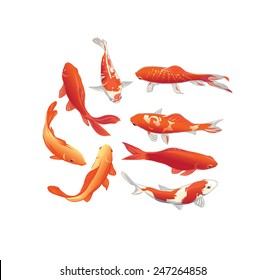 Red and gold koi fishes vector design elements