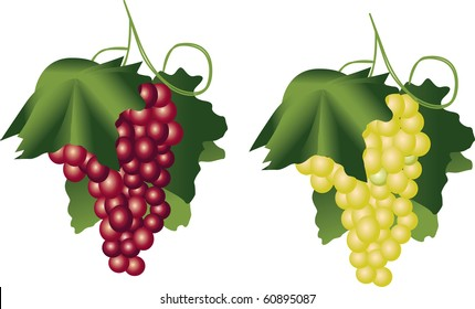Red and green vine over white background