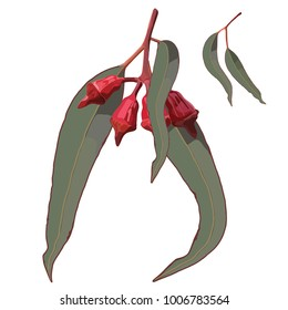 Red Gum Tree Nuts with Leaves Realistic Vector