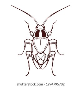 Red house cockroach, macro of an insect. Pest control. Monochrome brown outline icon. Vector illustration in cartoon style, isolated on white