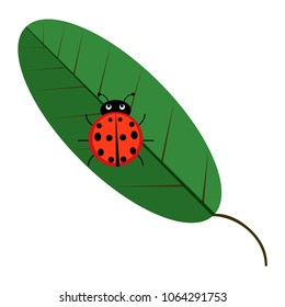 Red Ladybag with green leaf, plant icon isolated on background. Wild ladybird, beetle. Vector flat illustration