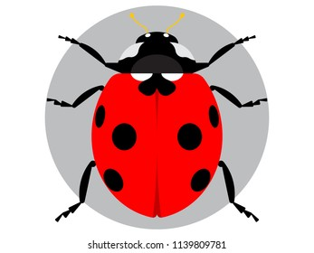 Red ladybug isolated on white. Vector illustration in flat style.