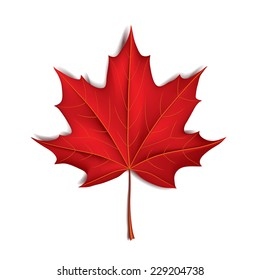 Red maple leaf isolated on white photo-realistic vector illustration