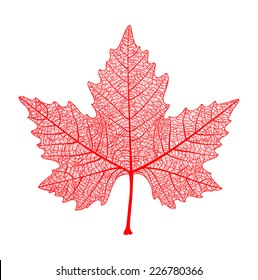 Red maple leaf isolated. Symbol of Canada. Autumn. Vector  illustration.