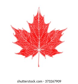 The red maple leaf with white veins.