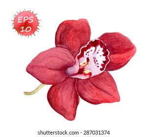 Red orchid flower for medical design (massage therapy, spa). Vector watercolor