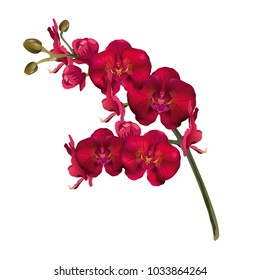 Red orchid flowers (Phalaenopsis). Realistic vector illustration on white background.