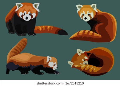 Red panda cat-bear collection, realistic flat ani,al vector set.