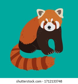 Red panda in a realistic style sits on on a green background. Chinese animals.