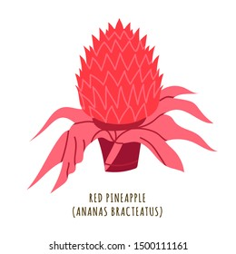 Red pineapple flat vector botanical illustration. Hand drawing of exotic, tropical flower. Isolated plant clipart with typography. Icon, logo design element for florist shop business