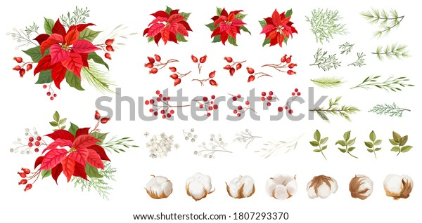 Red poinsettia vector Christmas flowers. Winter plants, floral elements illustration Watercolor concept. Traditional Xmas Set of green leaves and red petals, holly berry, pine branches, cotton flowers