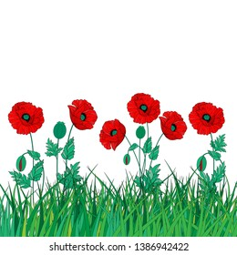 Red poppies on a green meadow.