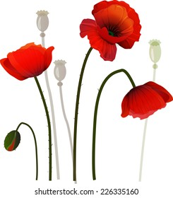Red poppies in a park