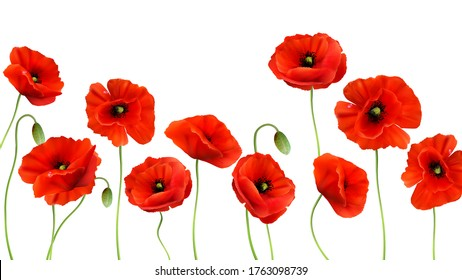 Red Poppy background. 3d Realistic Vector