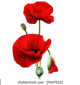 Red Poppy flower isolated on white background, vector illustration, EPS 10.