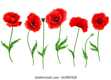 Poppy flower images stock photos vectors shutterstock red poppy flower isolated on white background vector illustration mightylinksfo