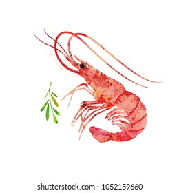 Red prawn or shrimp, watercolor illustration. Seafood picture.