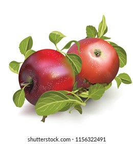 Red ripe apples isolated on white background, realistic vector illustration