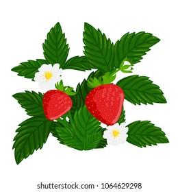 Red ripe strawberry. Berry Bush, cartoon. Vector.
