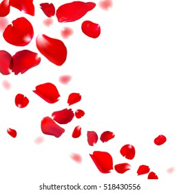 Red rose falling petals against white background. Eps 10 vector.