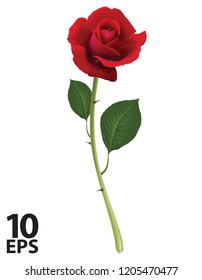 Red Rose isolated on white, vector 3d illustration