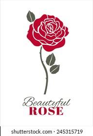 Red rose on white. Vector illustration.