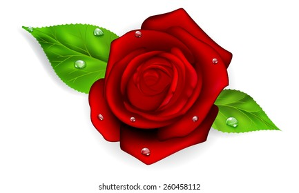 Red rose with two green leaves and dew drops