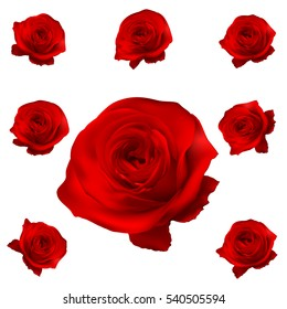 Red roses set isolated on white. EPS 10 vector file included