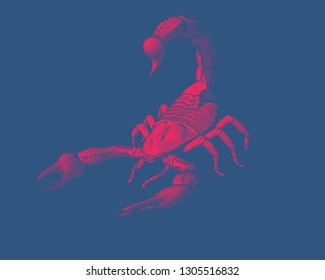 Red scorpion engraving vintage illustration isolated on deep blue background
