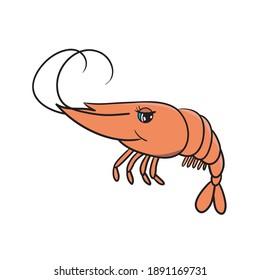 Red shrimp on white background. Detailed cartoon shrimp. Vector illustration