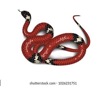 Red snake adder isolated on white background. Vector illustration.