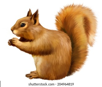 Red Squirrel (Sciurus Vulgaris) eating, side view, isolated on white background