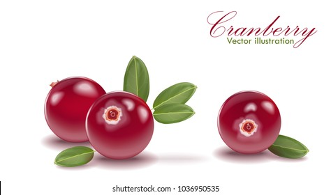 Red tasty cranberry set with leaf on isolated white background. Cranberries for juice, pudding, smoothie, sauces ads. 3d realistic icon package design. Lingonberry, cowberry, foxberry. Vector EPS 10