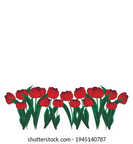 Red tulips. Illustration - flowers on a white background. Isolate.